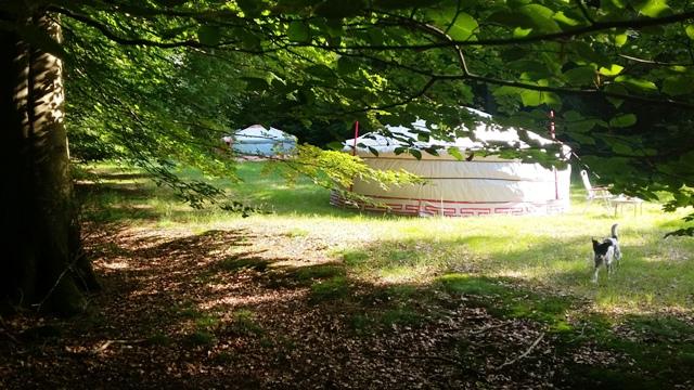 De Yurts in het Kniphorstbosch